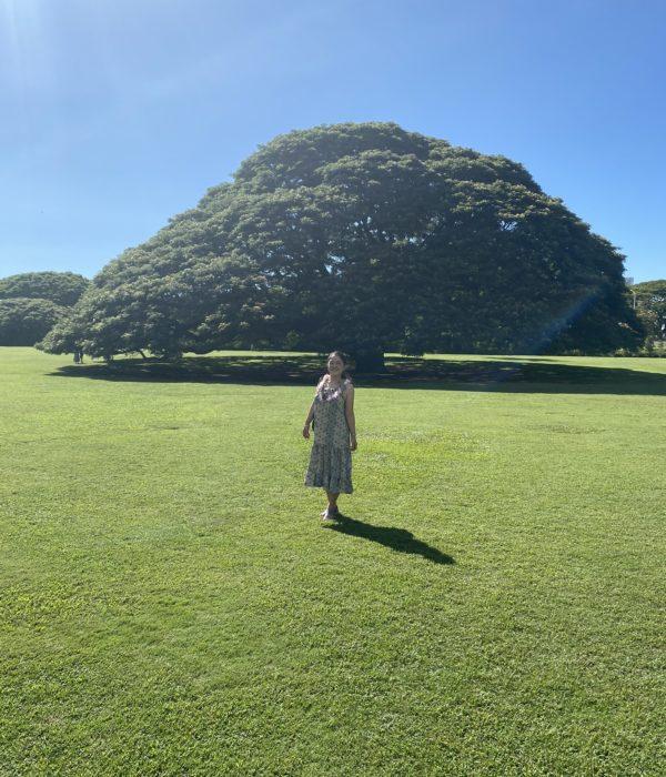 日本でおなじみ『この樹なんの樹、日立の樹』